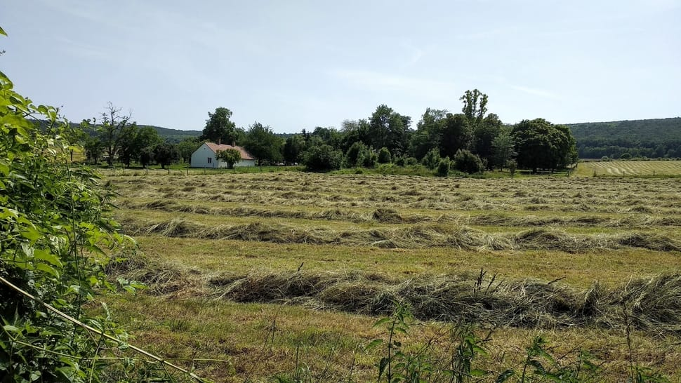 I. class hay produced by us