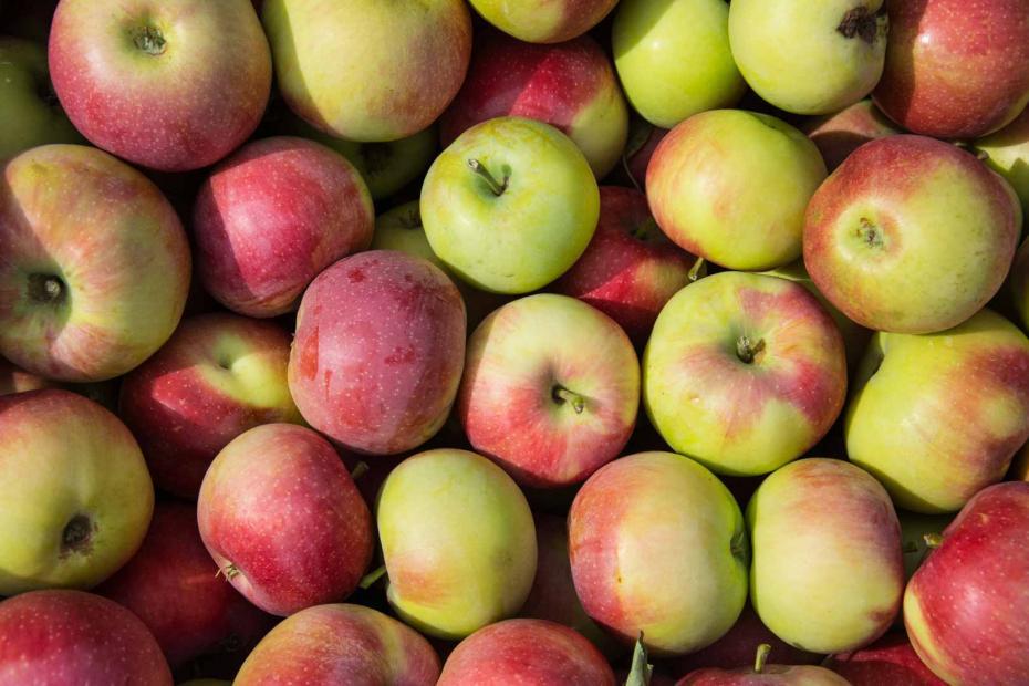 nyári alma (Kr-6)