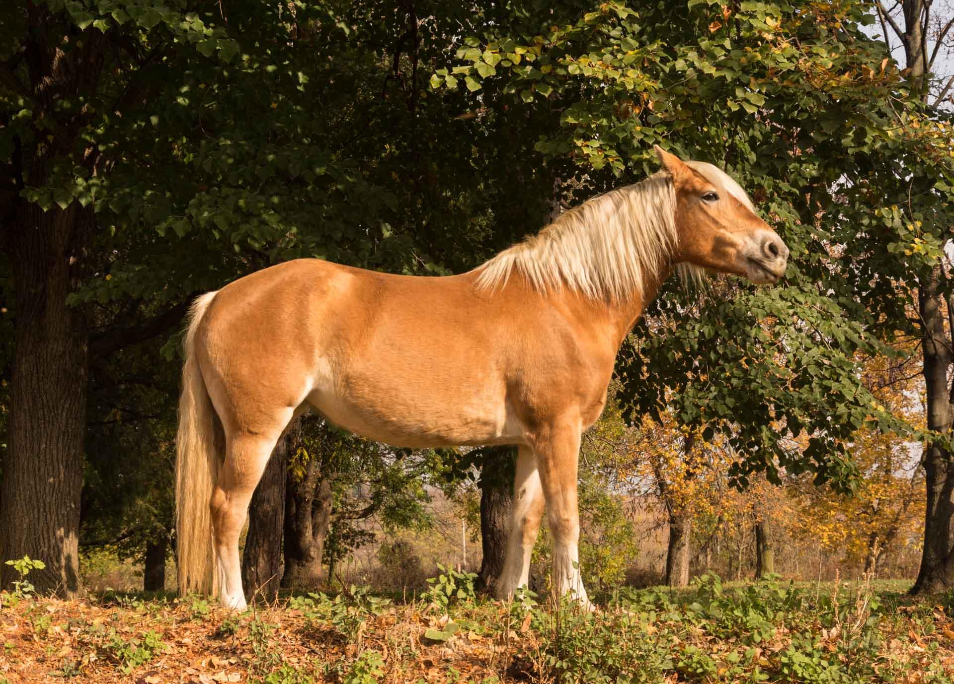 Maura születésnapi ló